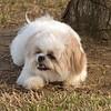 08 02-24 Doggie Olympics 10