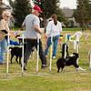 08 02-24 Doggie Olympics 01