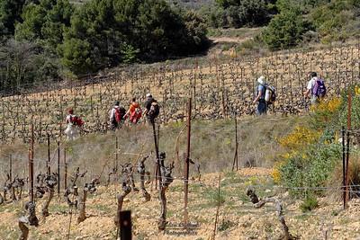 Randonneurs dans les vignes