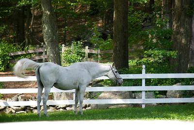 One of the neighborhood horses.