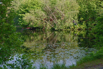 Reflections from the pond