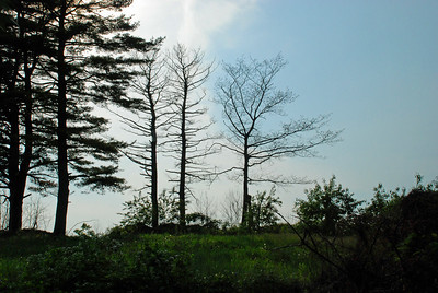 Cool silhouettes of some dead trees.