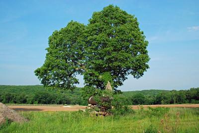 A little closer in - great tree BTW