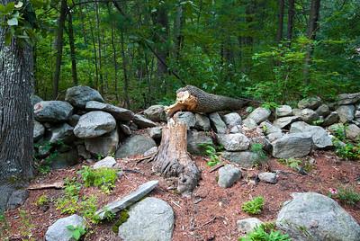 Fallen tree in the woods.