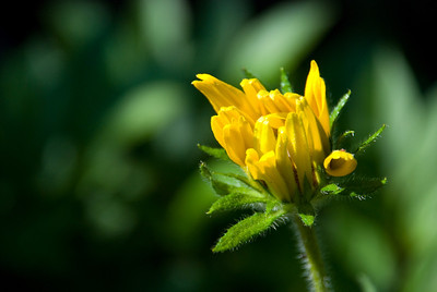 Another view of the unknown flower.