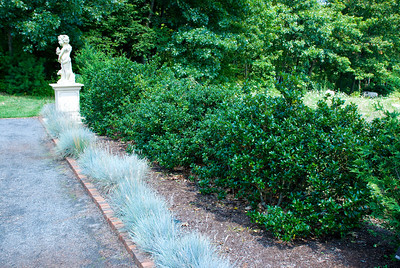 A pretty double hedge.  We believed the large bushes are a type of holly and of course ornamental grass in front.