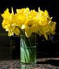 03-17-08 Daffodils in Vase
