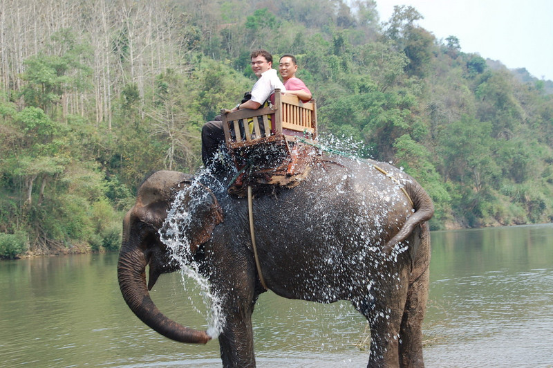 24 on an elephant