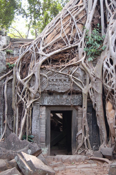 43 trees one temple nil
