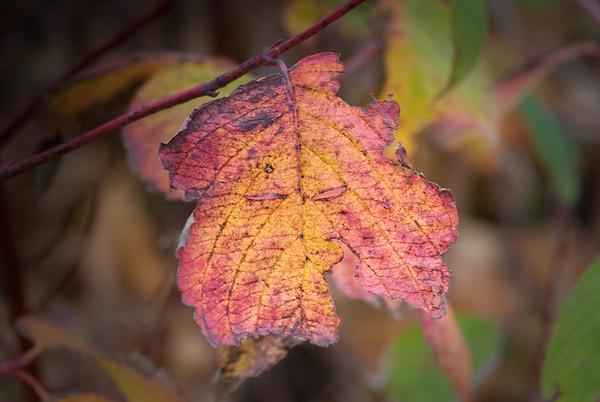 Leaf on a tree, woo woo!
