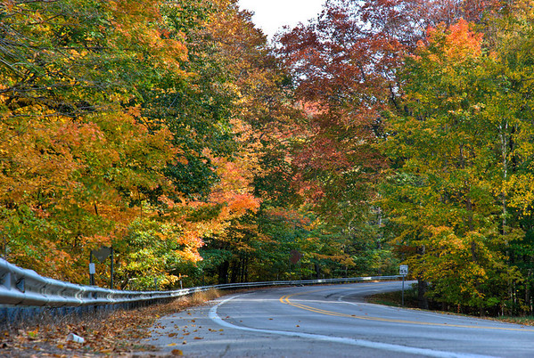 Another HDR of the pretty trees along the road.