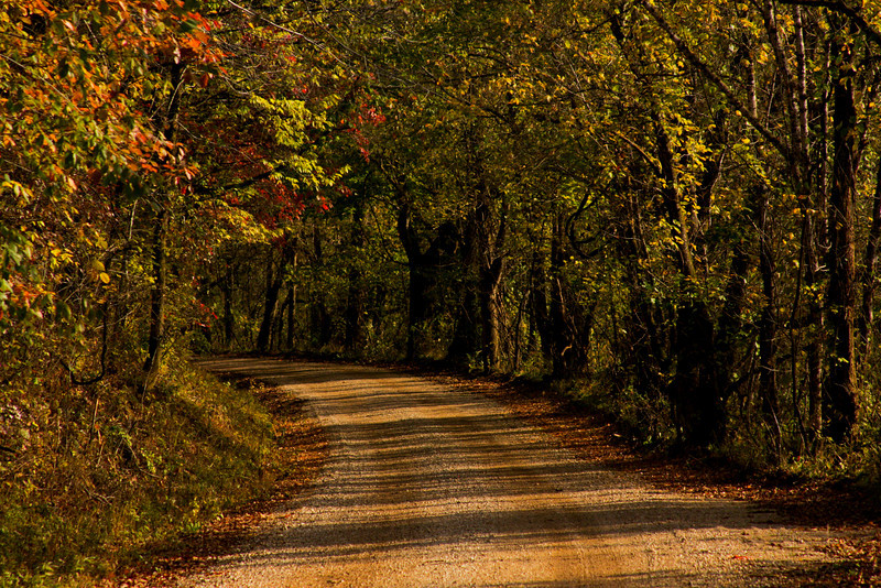 Evening sunlight filters through the leaves along a winding dirt road in Missouri.