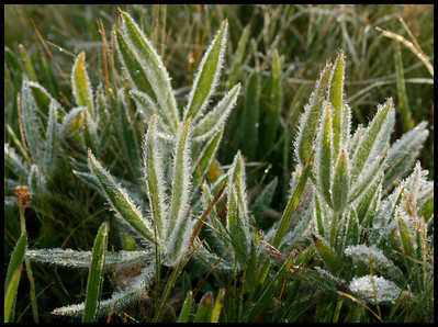 Frost in August.