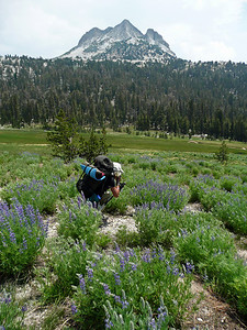 Lupine and Echo Peaks.