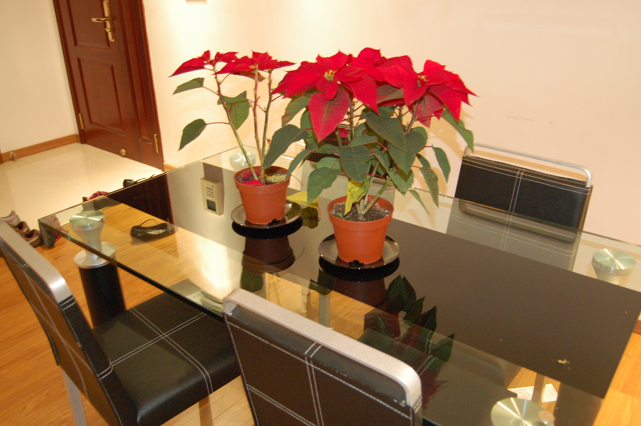 Table and stolen poinsettias