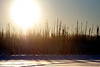 The Alaskan sunset happens early, making stark outlines of the black spruce beside the lake.