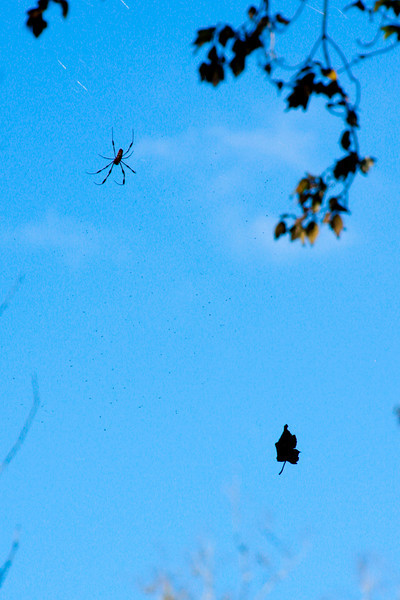 A spider floats in the air near a leaf caught in its web.