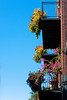 Balconies flower in bright colors over the streets of New Orleans.