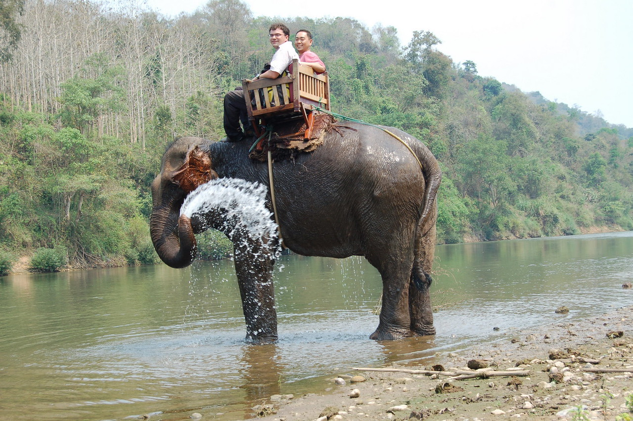 Squirting elephant