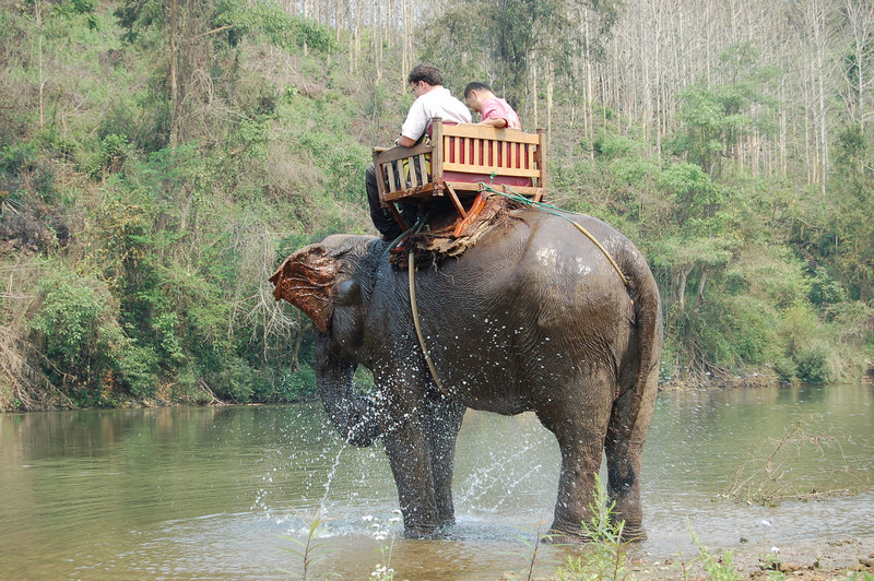 Elephant... attack!