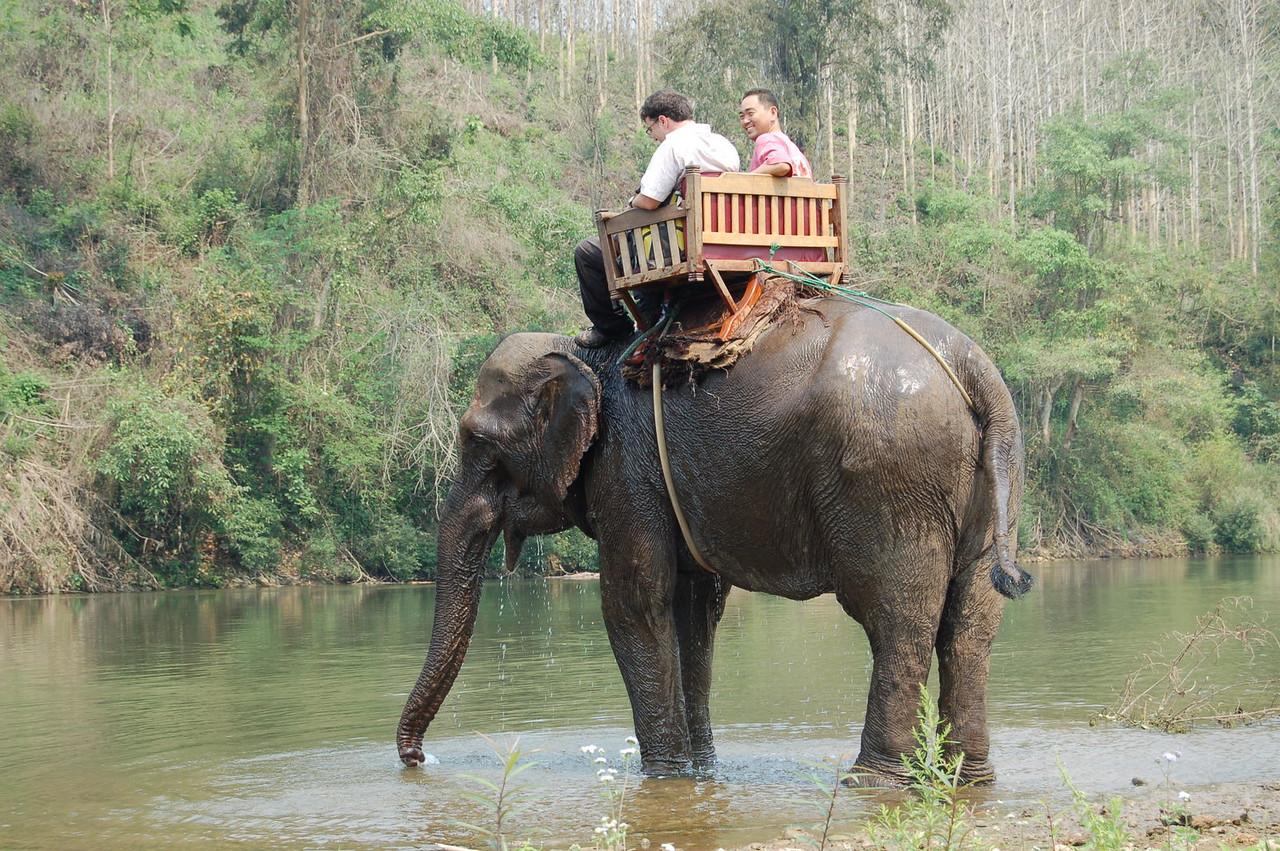 On the elephant