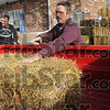 Paws: Bill Winkle puts a straw bale into the bed of a pickup truck at Graham Grain Co. Saturday morning.