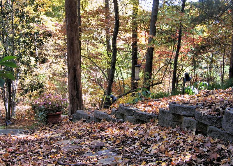 Backyard in November