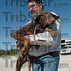 Traumatized: Dr. Michael Staub carries a dog that has spent its whole life in a cage to a waiting vehicle to be transported to the Honey Creek Animal Hospital for treatment. The dog was to traumatized to walk on a leash.