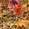 Unsafe: According to Don Archambeault, the red and pink flags on his property, like these two, act as a warning of a high concentration of PCBs.