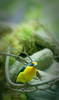 10-07-08 SF Natural History Museum - Yellow Bird