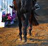 Horse Show 1