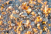 Naturally piled seashells litter the shoreline, offering great fodder for local beachcombers.