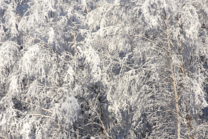 A thick hoar frost clings to the trees, showing how cold it really is.