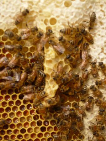 Purple hive status - 2008-07-13