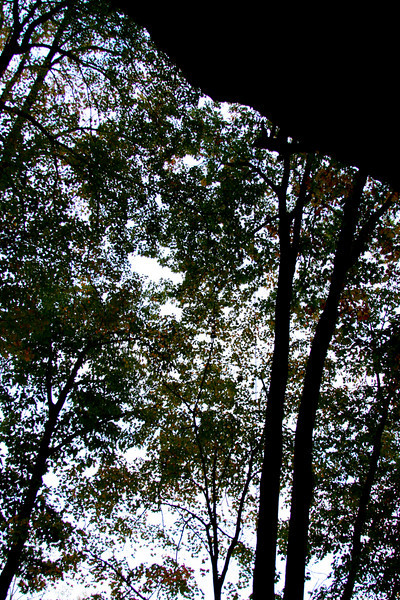 Thinning fall foliage obscures the cloudy sky as Kelsey prepares to rappel from <i>Twinkie 5.12a</i>.