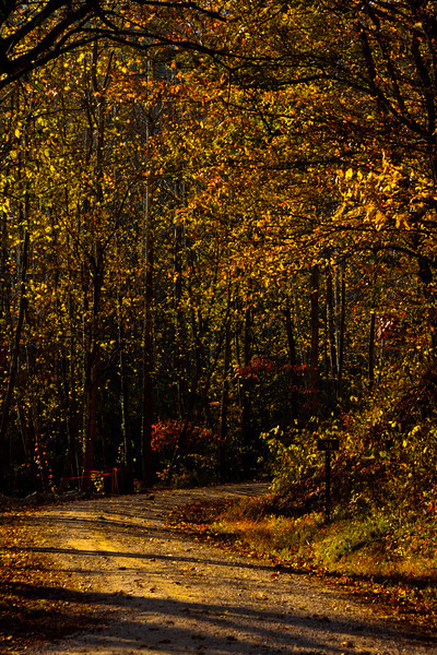 Golden light filters through the leaves and illuminates another curve in the road.