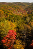 Trees are turning yellow and red across the whole Red River Gorge.