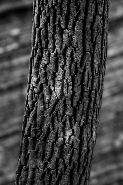 Rough textures abound in the Kentucky woods, whether it be the chunks of rock looming in odd places or the details of the trees all a