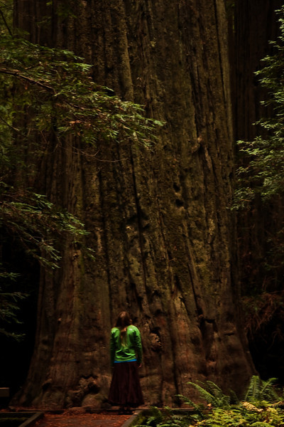 Tracy looks up at the Founder's Tree, a giant redwood in northern California.