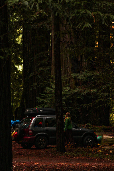 Our little Kia sits dwarfed by a redwood cluster.