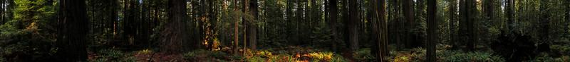 A stitched 360 degree pano, with Kelsey climbing the roots of a fallen tree on the right.