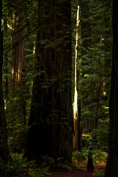 The thick jungle silently surrounds Tracy and this redwood.