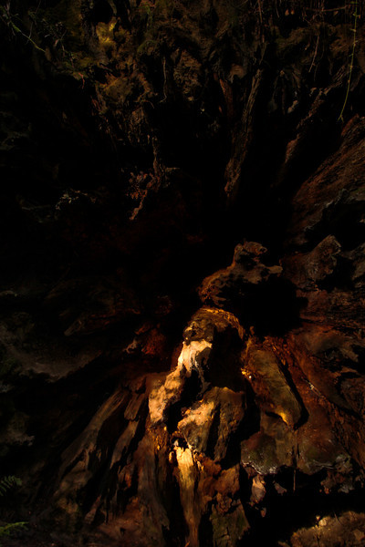 A single tiny sunbeam lights up a portion of the roots of a fallen giant.