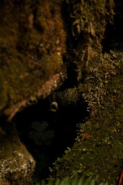 Darkness can't keep this little guy down, hiding in a hole under the redwoods.