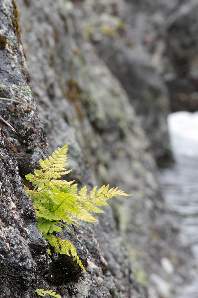 A fern clings to the side of Reed Creek.