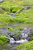 A quite trickling stream rolls down the moss, heading to the ocean in a day or two.