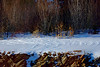 Rocks and Snow (oil)