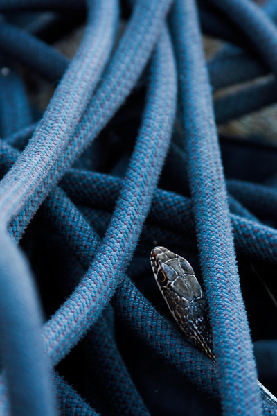 Our blue rope shows a bit of difference from this snake's scaly skin.