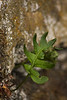 Nature takes small steps to reclaim the walls of concrete and brick.