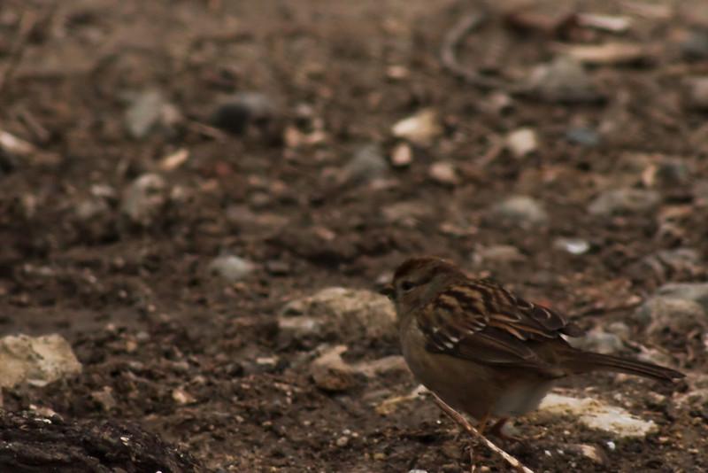 A tiny fat bird on the island.